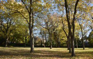 image-park-playground-13